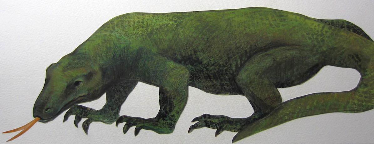 Komodo dragon 2.uncroped